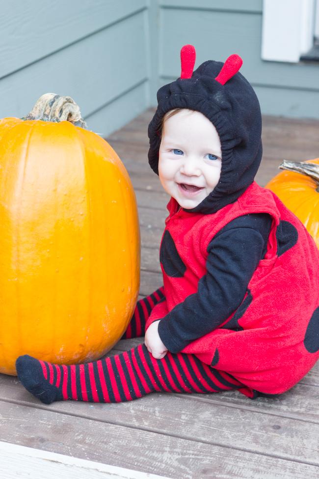 halloween-lady-bug