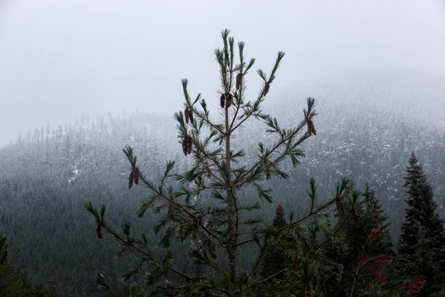 winter_season