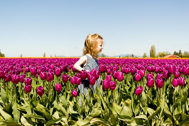 Tulip_Festival_Skagit_Valley
