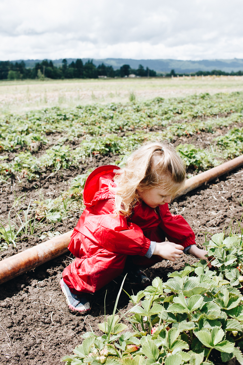 Adventuring with kids: Strawberry picking!