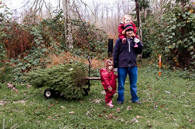 christmas-tree-2017-7