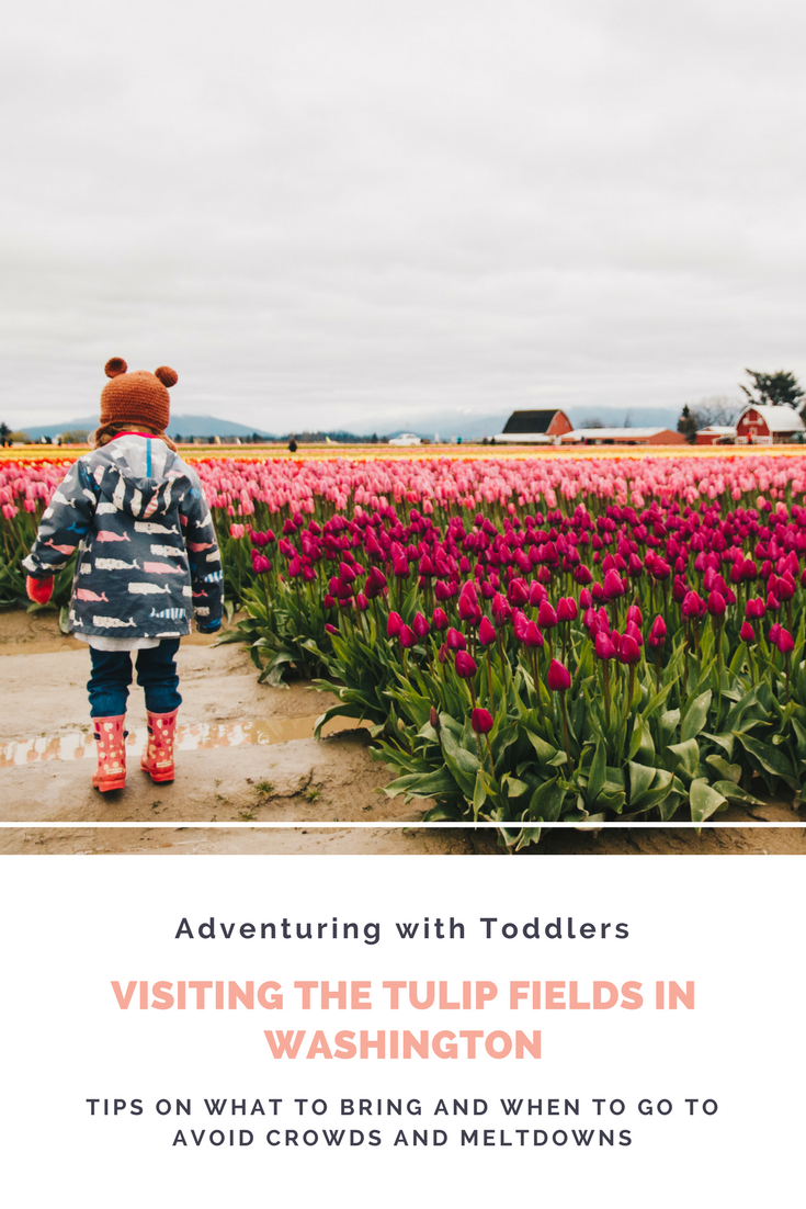 Tips for visiting the tulip fields in Washington (with toddlers)!