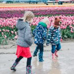 Visiting the tulip fields in Washington (with toddlers!)